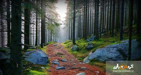 جنگل سیاه آلمان؛ جاذبه گردشگری وحشتناک که نباید دید!+عکس
